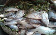 أسعار الأسماك اليوم الجمعة 16-11-2018