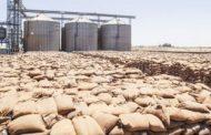 وزير التجارة العراقى: شراء 2.5 مليون طن من القمح محلى من المزارعين