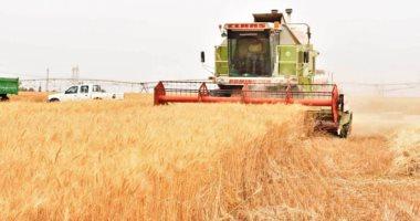 مشتريات القمح المحلى بالعراق تتجاوز 3.2 مليون طن منذ بداية الموسم
